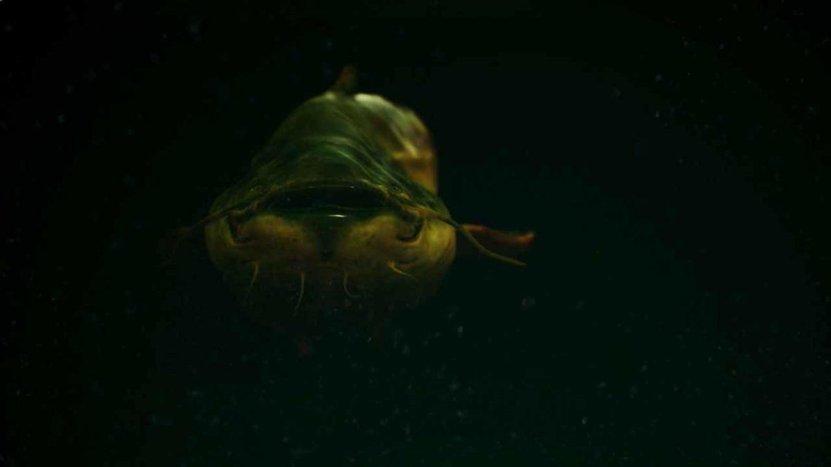 The Catch: Carp & Coarse - Пять новых мест, где вы можете поймать рыбу-монстра