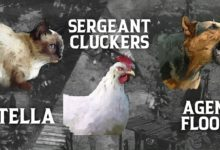 Photo of Кот, курица, собака и конкурс Speedrun: еще одно бесплатное обновление для Desperados 3