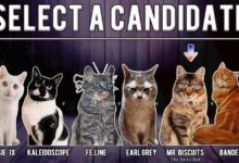 Photo of Кошки вернулись, чтобы завоевать ваше сердце – и ваш голос в Cat President 2: Purrlitical Revolution